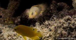 Fear tactics in fish
