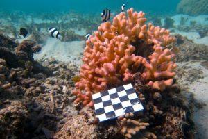 Damselfish Promote Coral Health