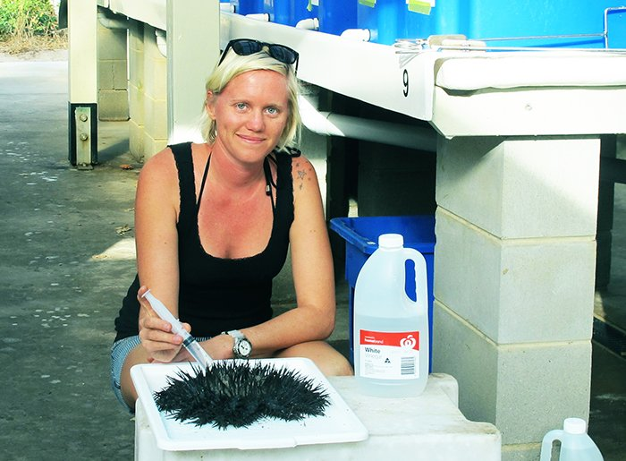 Lisa injecting COTS at Lizard Island. © Lisa Bostrom-Einarsson