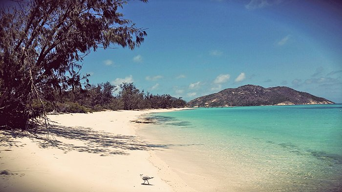 A Lizard Island beach. Photo credit Nikki Weston