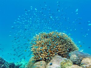 Schooling influences metabolism and behaviour on coral reefs