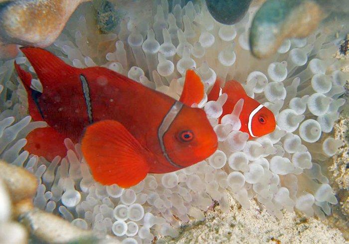 Nemo's Cousins #1