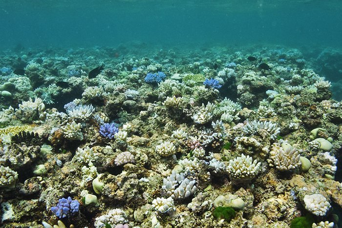 One of the reefs