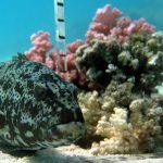 Behavioural interactions in the fish food-web