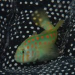 Evolution of Sociality in Coral Reefs
