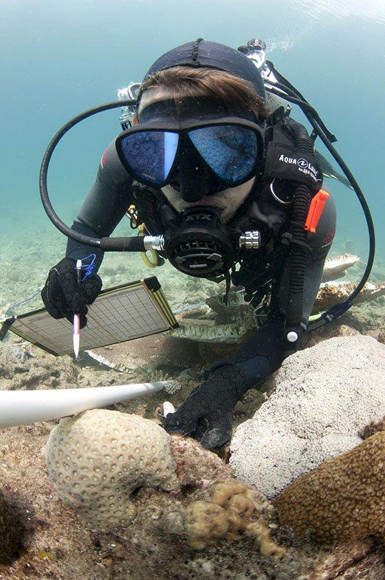 Joe Pollock researching off Lizard Island