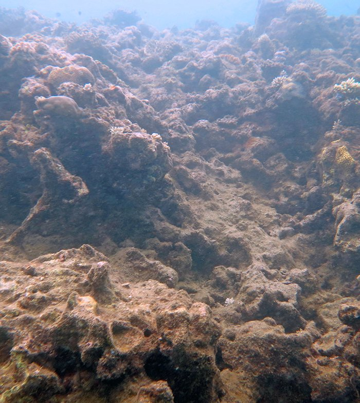 Despite coral mortality and slopes of rubble, some of the structure remains complex enough to serve as good fish habitat.