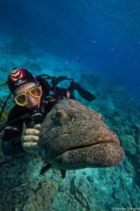 Roche_grouper
