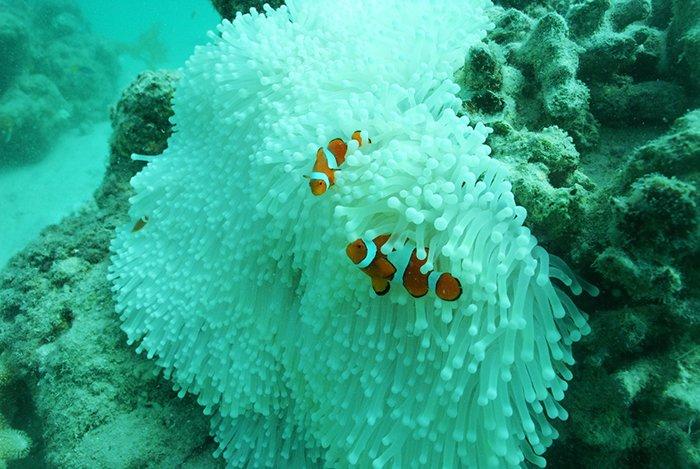 Losing Nemo