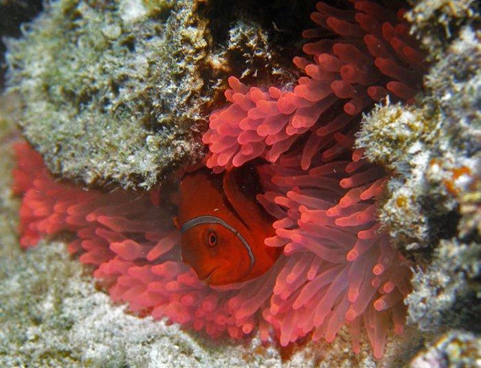 Nemo's Cousins #2