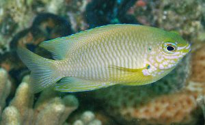 Fish perception, memory and learning