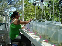 Team member Amira Parker training fish at the Lizard Island Research Station; Photo credit Siebeck Lab