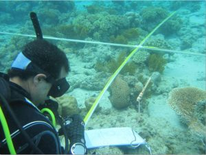 Martin Hing conducting research off Lizard Island