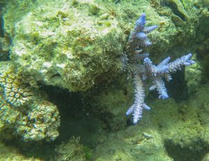 Coral recovery – basis for hope