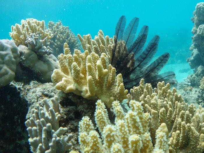 Lizard Island corals