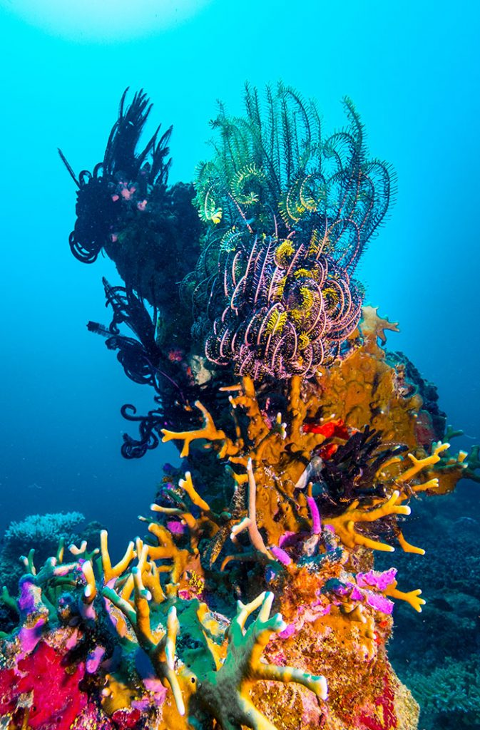 Lots to see and study at Lizard Island