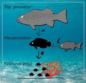 Top predators help juvenile fish