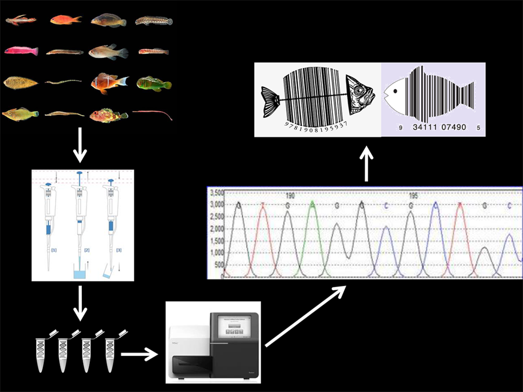 Ichthyology, eDNA and barcoding