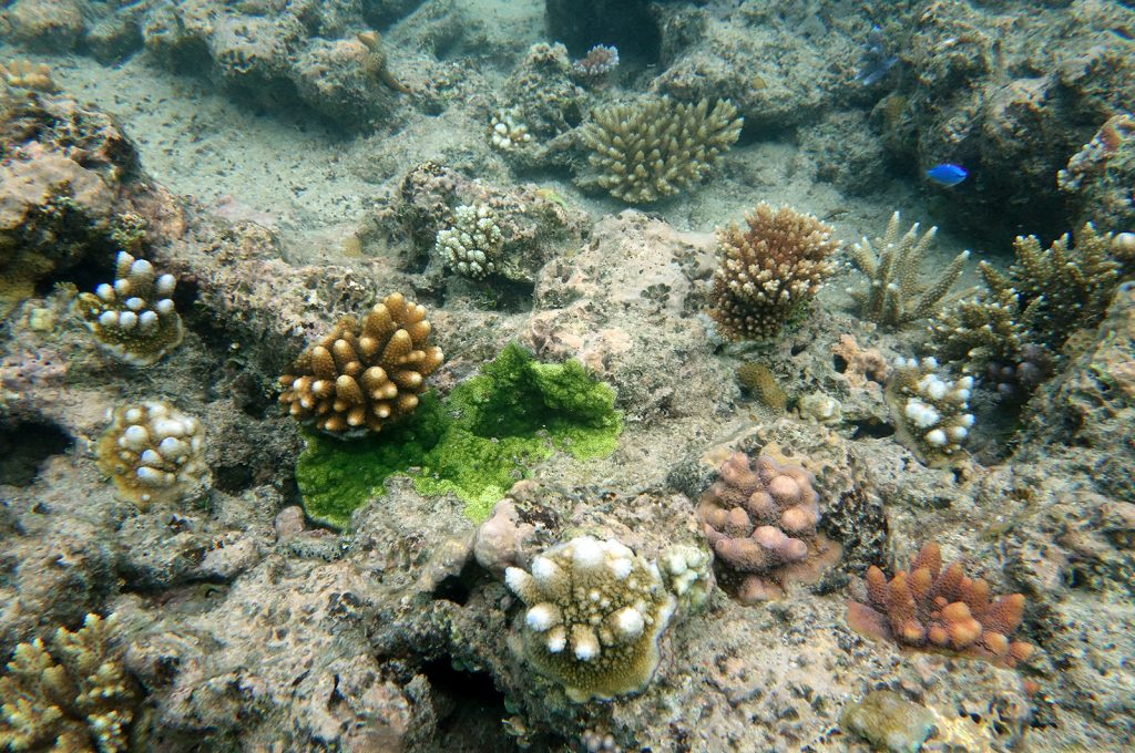 Students from Geelong College study reef ecology