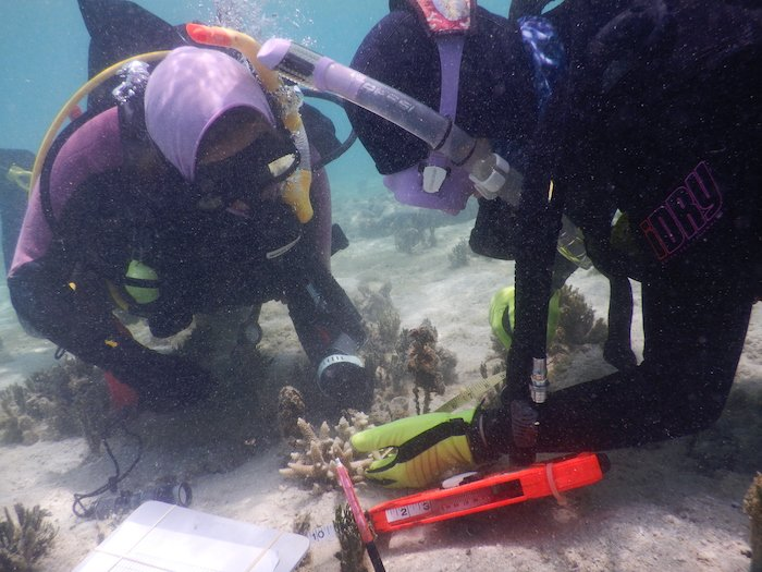 Corals and goby fishes showing signs of recovery at Lizard Island