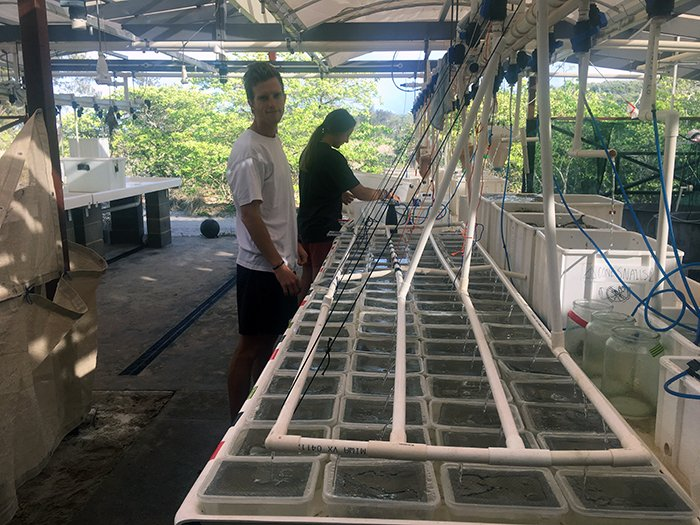 Microplastics and DEHP in coral reef fish