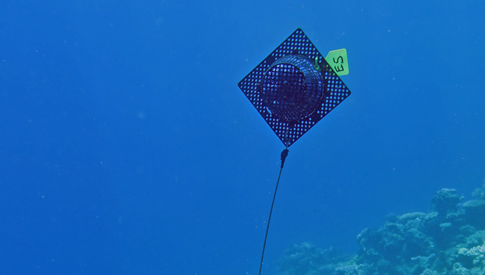 Early detection of Crown-of-Thorns Starfish outbreaks