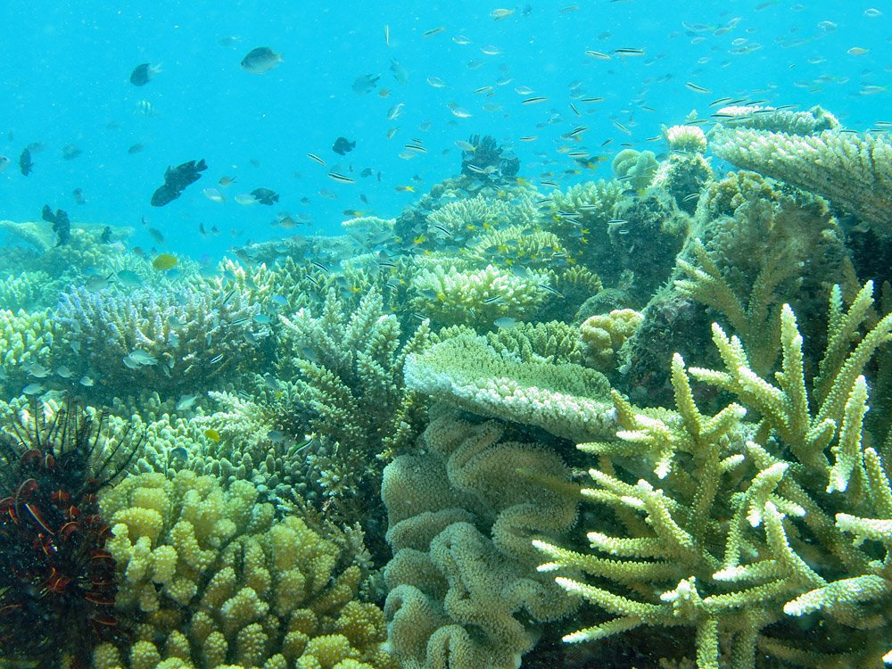 2021 Coral bleaching at Lizard Island