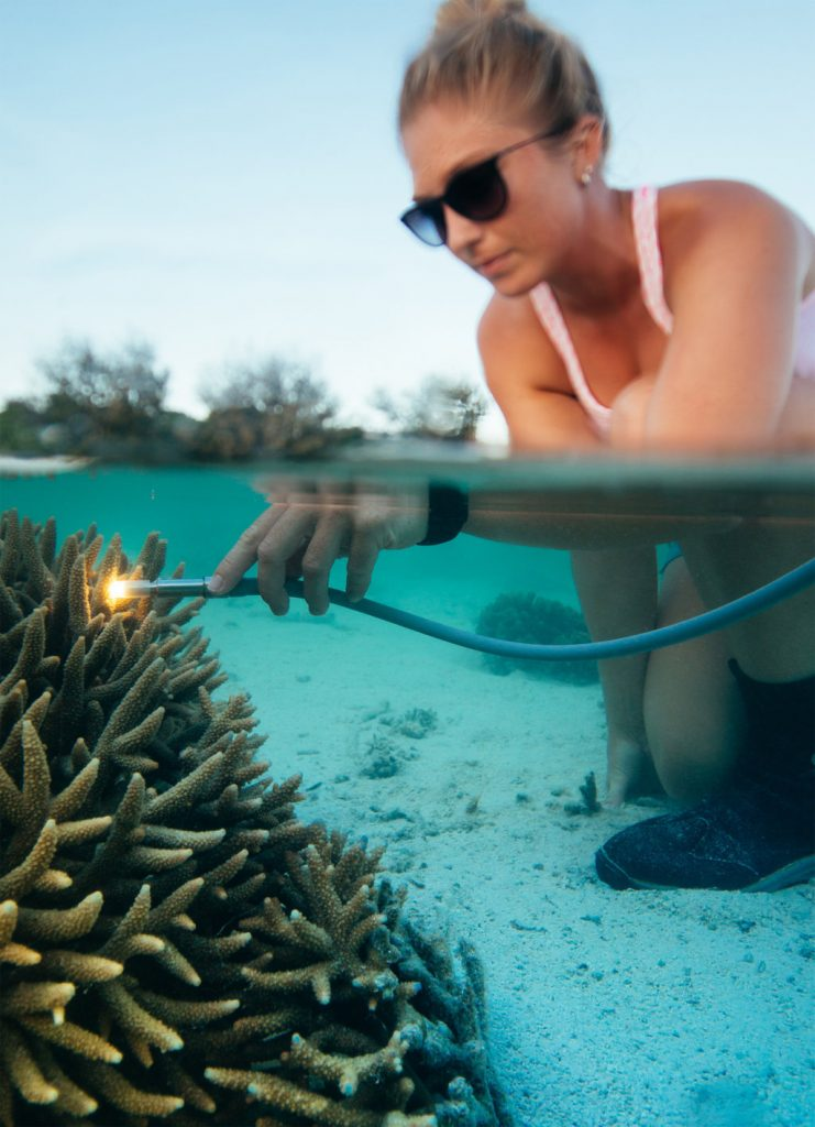 Rise of the turfs: unlocking the secrets of our changing reefs