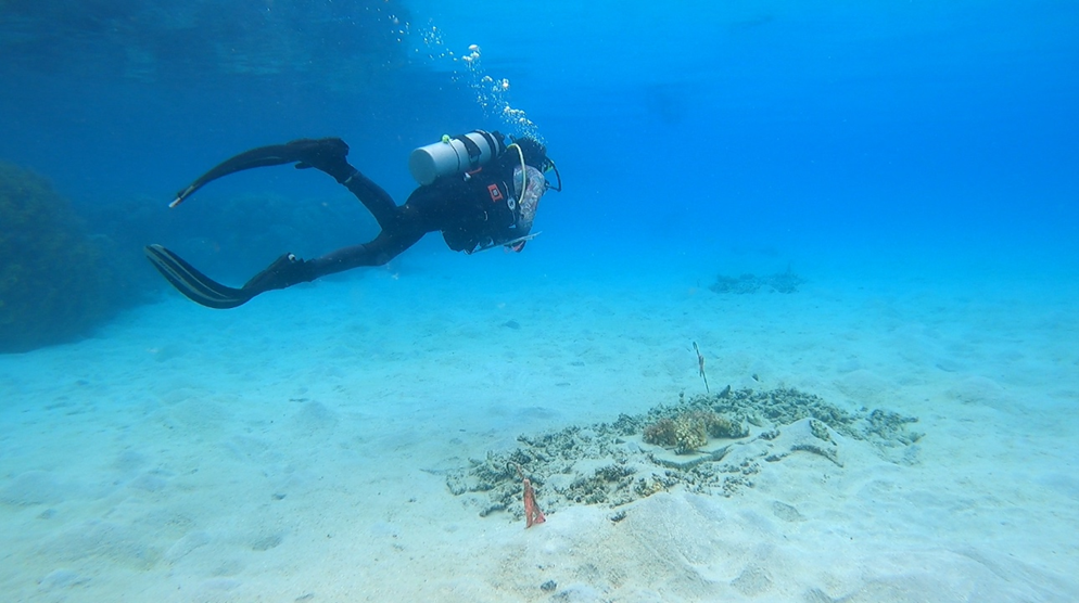 Coral reef degradation: testing the resilience of fish communities