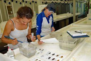 Researchers in aquarium