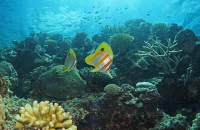 The Sapphire ProjectandThe Great Barrier Reef