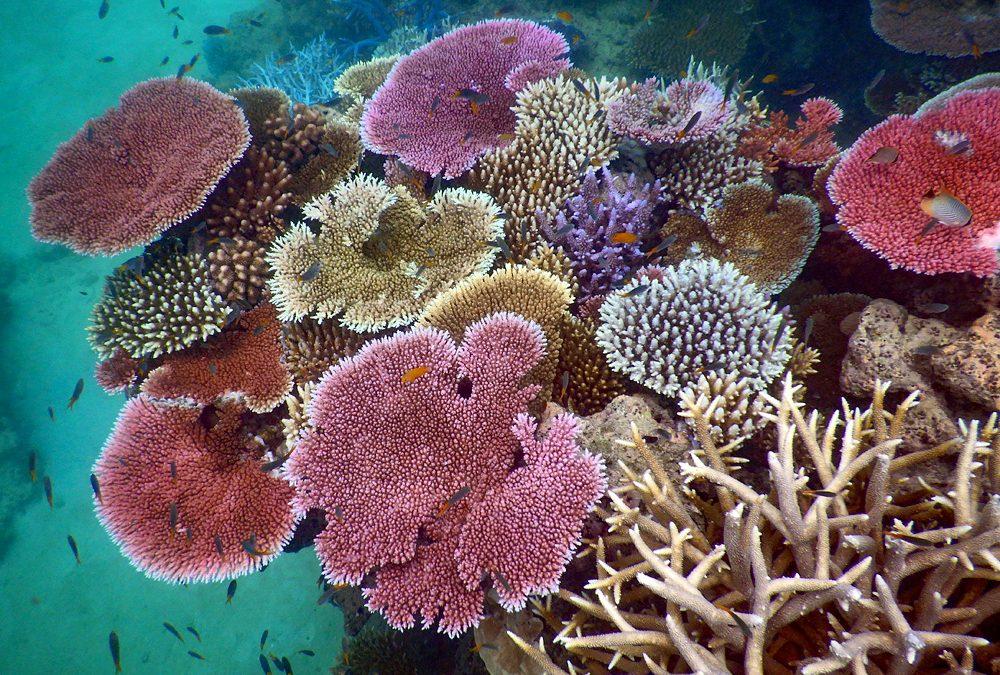 Changing reefs